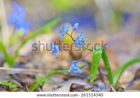 macro violet flowers in forest - stock photo