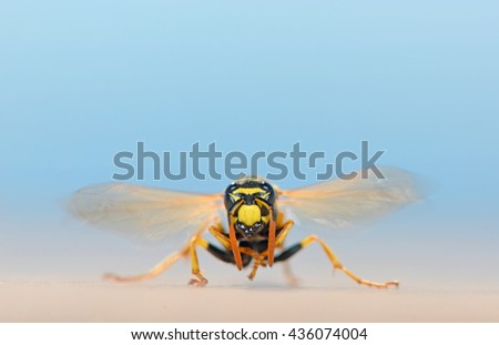 macro wasp in nature shoot on summer sand - stock photo