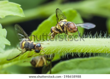macro wasp of the garden - stock photo
