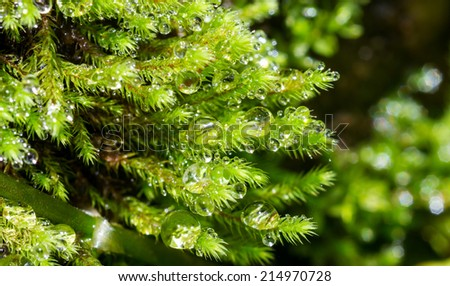 Macro water drop on plant in nature - stock photo