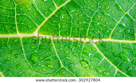 macro water drops on green leaf background texture - stock photo