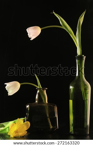 macro white and yellow tulip in a bottle covered with water drops on black background studio - stock photo
