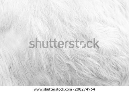 Macro White Goat Hair.Macro with extremely shallow dof - stock photo