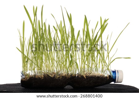 macro young green grass on white background studio - stock photo