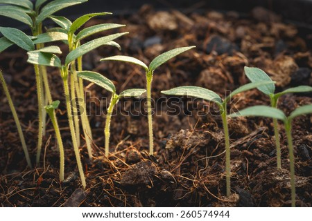 Macro young green plant in soil - stock photo