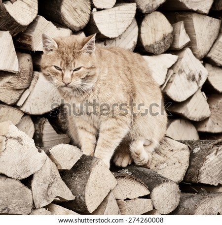 Mad kitty - stock photo