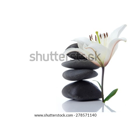 madonna lily with spa stones on white - stock photo
