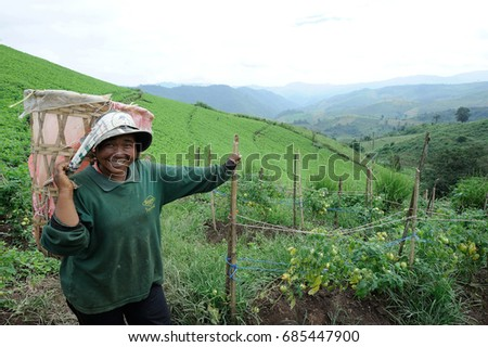 Mae Hong Son Thailand - October 30, 2013 : farmer woman smile and working in tomato field at Mae Hong Son Province , Thailand