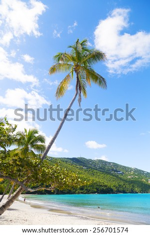 Magens Bay beach in the morning on St Thomas Island, US VI. Scenic beach view with palms, white sand pelican and rolling waves.  - stock photo