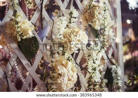 Magenta Bougainvillea plant in bloom on wooden patio pergola on Greek island Kalymnos - stock photo