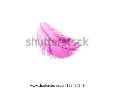 "magenta feather isolated on a white background, ""Radiant Orchid"" is the color of the Year 2014"