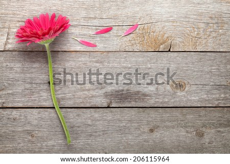Magenta gerbera flower on wooden table with copy space - stock photo