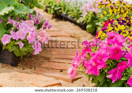 Magenta petunia flowers in pots blossom with brick walkway in flower garden - stock photo