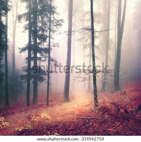 Magic autumn season color forest tree background with bright orange red path. Beautiful seasonal woodland. - stock photo