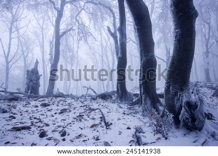 Magic beautiful misty forest in winter or autumn season