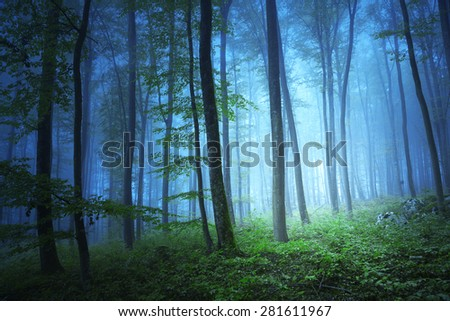 Magic blue color light in mystic beech tree forrest.