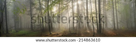 Magic Carpathian forest at dawn filled with the gentle rays of the sun in a misty morning haze. Alpine miracle available to anyone who at the dawn Take a walk after the rain - stock photo