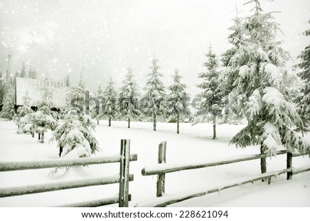 Magic Christmas background with snowy fir trees - stock photo
