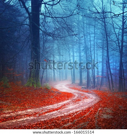 Magic colorful autumn forest road. - stock photo