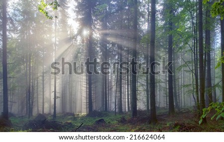 Magic fantastic Carpathian forest Ukraine at dawn filled with the gentle rays of the sun in a misty morning haze. Alpine miracle available to anyone who at the dawn Take a walk after the rain - stock photo