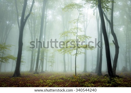 Magic fog in the forest
