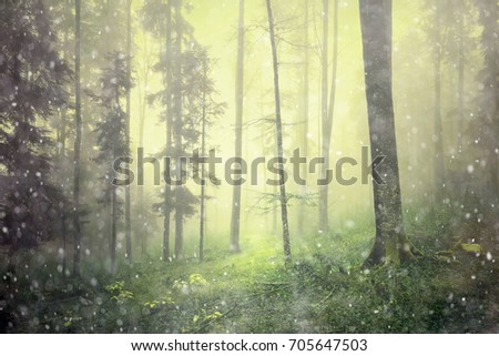 Magic foggy light in forest fairy tale landscape.