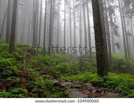 Magic forest. Babiogorski National Park. Poland. Tatry mountains. - stock photo