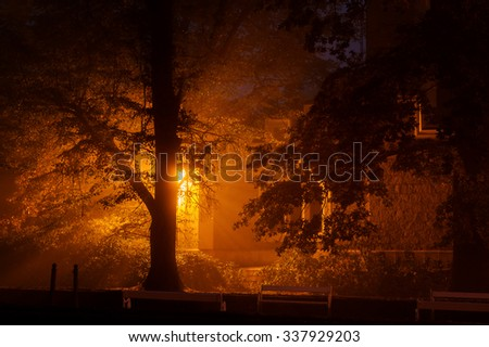 Magic glowing light from castle in mysterious mist behind tree. Hidden fairy castle in the wood with fairytale atmosphere