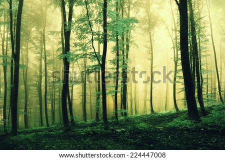 Magic green colored foggy forest scene. Color filter effect used. - stock photo