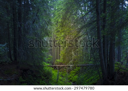 Magic green forest