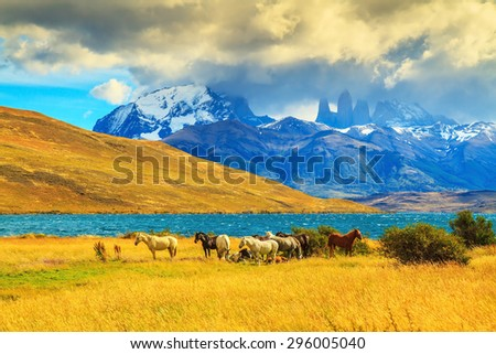 Magic light of sunset.  Rocks Torres del Paine visible among the clouds. Herd of mustangs on the shore of Laguna Azul - stock photo