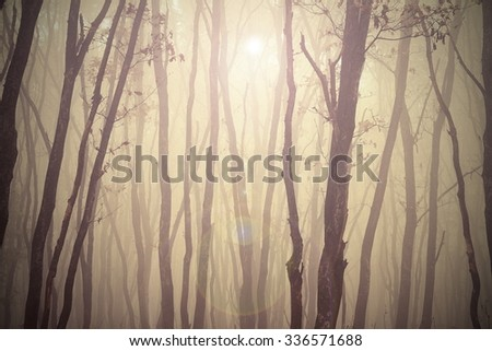 magic misty forest view, trees in fog - stock photo
