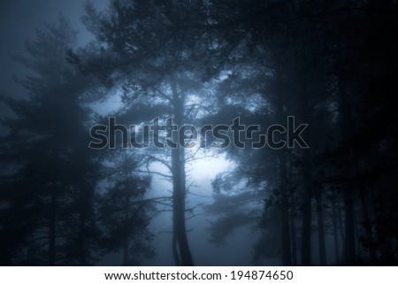Magic moonlit glowing dark forest - stock photo