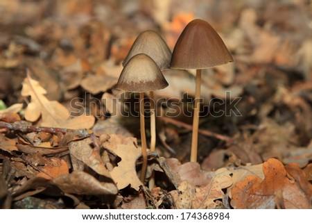 Magic Mushrooms Stock Images Royalty Free Images
