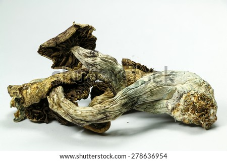 Magic Mushrooms 5. Psilocybin mushrooms, also known as Magic Mushrooms, a psychedelic drug that causes hallucinations which has been used by humans for thousands of years. - stock photo