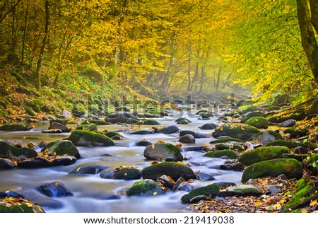 Magic river in forest, autumn landscape.  - stock photo