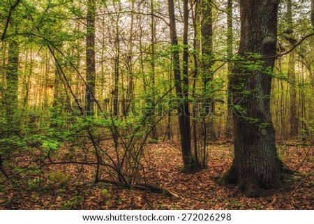 Magic Spring Forest. Franconian Woods in northern bavaria, Germany. Early in the Morning. Fresh seasonal colors