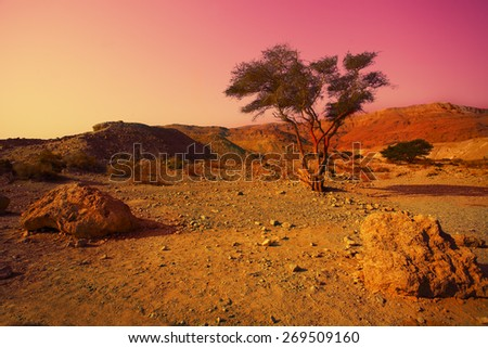 Magic sunrise over desert. Israel. - stock photo