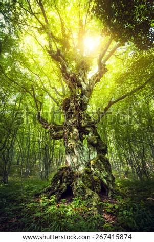 Magic Tree. Beautiful spring sunrise in the forest (Crimea) - stock photo