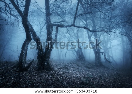 Magic tree in mysterious autumn forest in blue fog in the rainy morning. Beautiful landscape. Vintage style