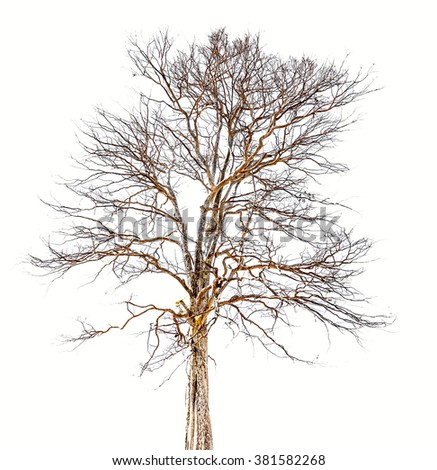 Magic tree on white background,