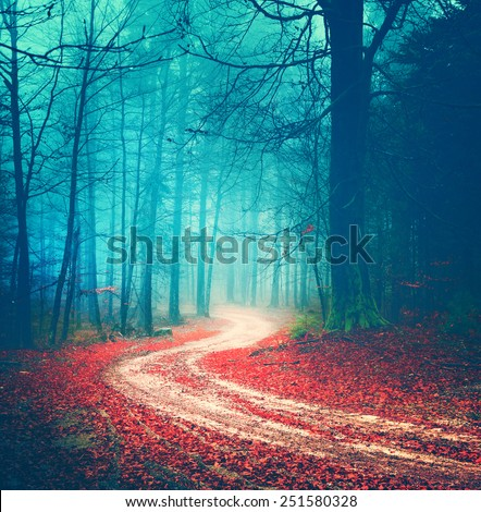 Magic vintage color autumn forest road.  - stock photo