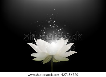 Magic White Lotus flower on black background - stock photo