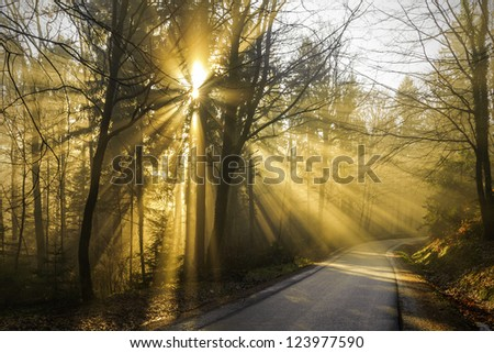 Magical beams of sunlight shine through the trees on the forest road - stock photo