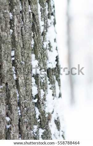 magical fairytale winter wood