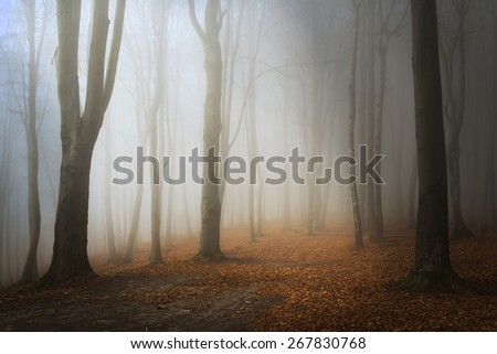 Magical foggy forest - stock photo
