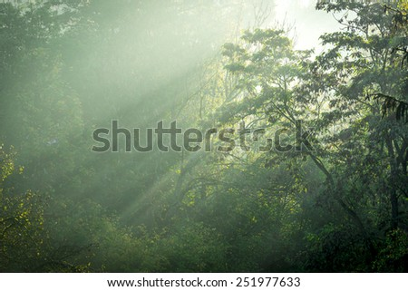 Magical Forest With Morning Sunlight Rays