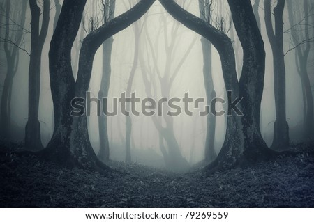 magical gate in a mysterious forest with fog - stock photo