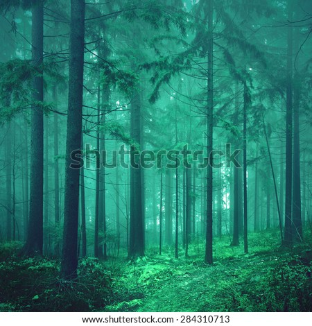 Magical green colored foggy fairytale forest background. Photo was taken in south east Slovenia, Europe. Color filter effect used. soft focus.