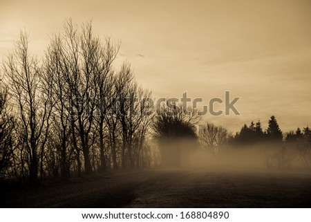 Magical morning mist foliage on a beautiful countryside scenery landscape - stock photo
